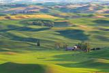 Washington State, Palouse Hills. Farmland Viewed from Steptoe Butte Fotografisk trykk av Don Paulson