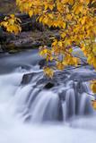 USA, Oregon. Rogue River Waterfalls in Autumn Fotografisk trykk av Jean Carter