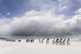Falkland Islands. King Penguins Watch as a Storm Approaches Fotografisk tryk af Martin Zwick