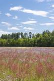 Field of Spring Roadside Wildflowers Fotografisk trykk av Trish Drury