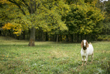 Pittsburg, PA. USA. Fall on the Farm Fotografisk tryk af Julien McRoberts