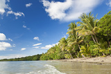 Beach, Cape Tribulation, Daintree National Park, Queensland, Australia Foto von Peter Adams