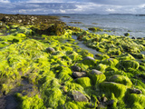 Isle of Lewis, Coast at the Eye Peninsula. Scotland in July Foto av Martin Zwick