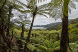 Tree Fern Forest Above the Coast of Abel Tasman NP, New Zealand Photographie par James White