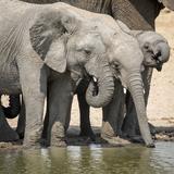 Namibia, Etosha National Park. Elephants Drinking at Waterhole Photo by Wendy Kaveney