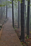 Trail in Fog, Yellow Mountains a UNESCO World Heritage Site Foto von Darrell Gulin