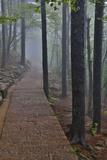Trail in Fog, Yellow Mountains a UNESCO World Heritage Site Fotografía por Gulin, Darrell