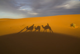 North Tafilalet, Erfoud, Merzouga, Erg Chebbi, Dromedary Camel Caravan Fotografía por Emily Wilson