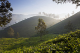 Tea Plantations, Munnar, Western Ghats, Kerala, South India Foto von Peter Adams