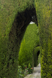 Granada, Spain, Alhambra, Famous Hedges of Gardens of the Generalife Photographie par Bill Bachmann