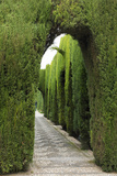 Granada, Spain, Alhambra, Famous Hedges of Gardens of the Generalife Foto von Bill Bachmann