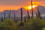 USA, Arizona, Saguaro National Park. Sunset on Desert Landscape Foto av Cathy & Gordon Illg