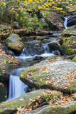 Tennessee, Great Smoky Mountains NP, Roaring Fork River Fotografía por Jamie & Judy Wild