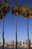 USA, California, San Diego. San Diego Skyline and Palm Trees Photographie par Kymri Wilt