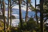 Coastline at Cannon Beach, Viewed Through the Trees, Ecola SP, Oregon Foto av Brian Jannsen