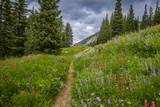 Wildflowers in the Albion Basin, Uinta Wasatch Cache Mountains, Utah Photographie par Howie Garber