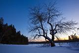 An Apple Tree at Sunset, Notchview Reservation, Windsor, Massachusetts Foto von Jerry & Marcy Monkman