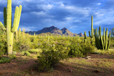 Organ Pipe Cactus National Monument, Ajo Mountain Drive in the Desert Photographie par Richard Wright