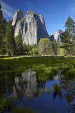 Cathedral Rocks Reflected in a Pond and Deer, Yosemite NP, California Foto av David Wall