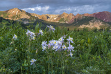 Colorado Columbine from Gothic Road, Crested Butte, Colorado Photo by Howie Garber