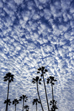 Palm Trees Silhouetted Against Puffy Clouds in San Diego, California Foto af Chuck Haney