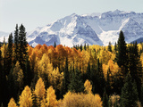 Colorado, San Juan Mountains, Autumn Aspens Below Snowy Mountains Foto av Christopher Talbot Frank