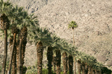 Scenic of Palm Trees, Palm Springs, California, USA Photo by Julien McRoberts