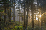 Sunset Rays Penetrate the Forest at Heceta Head, Siuslaw NF, Oregon Foto di Chuck Haney