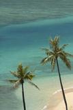 Hawaii, Oahu, Honolulu, Waikiki, Fort Derussy Beach and Palm Trees Photographie par David Wall
