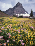 USA, Montana, Glacier National Park, Wildflowers and a Mountain Peak Fotografia por Christopher Talbot Frank