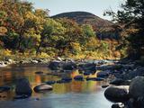New Hampshire, White Mountains NF, Autumn Colors of Sugar Maple Trees Foto av Christopher Talbot Frank