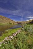 USA, Oregon. Milkweed Along the John Day River Photo by Steve Terrill