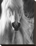 White Lightning Stretched Canvas Print by Barry Hart