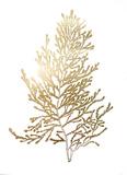 Gold Foil Algae IV Poster by Jennifer Goldberger