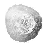 Silver Foil Tree Ring IV Posters af  Vision Studio
