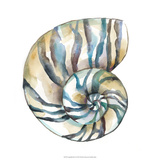 Aquarelle Shells II Giclée-Druck von Chariklia Zarris