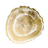 Gold Foil Tree Ring III 高品質プリント : ビジョン・スタジオ
