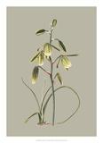 Botanical Cabinet IX Giclée-tryk af E. Cooke
