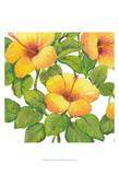 Watercolor Hibiscus III Plakater av Tim OToole