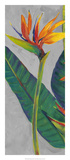 Bird of Paradise Triptych I Poster af Tim OToole