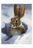 Snow Bunny Print by Carolyne Hawley