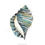 Aquarelle Shells I Giclée-tryk af Chariklia Zarris