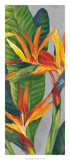 Bird of Paradise Triptych II Plakater af Tim OToole