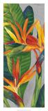 Bird of Paradise Triptych II Print by Tim OToole
