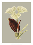 Botanical Cabinet VIII Giclée-vedos tekijänä E. Cooke