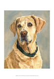 Lucy Yellow Lab Posters by Edie Fagan