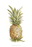 Pineapple Sketch II Posters by Ethan Harper