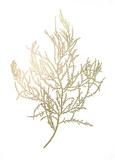 Gold Foil Algae III アート : ジェニファー・ゴルトベルガー