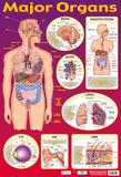 Major Organs Prints