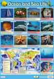 Ocean & Sea Life Posters